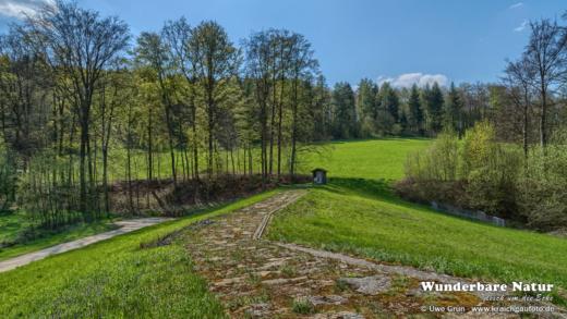 Waldwiesen am Grundbach